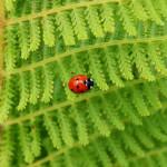 啓蟄(けいちつ)の意味とは、春に虫が出てくる日?