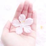 2種類の桜餅の作り方とカロリーは?桜餅の葉っぱは食べる?