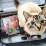 スーツケースの荷物の詰め方!パッキング術の基本とコツ