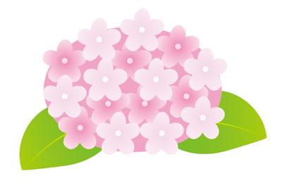 紫陽花-ピンク