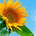 夏の暑さ対策をして元気にのりきる方法!【まとめ保存版】