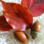 夏バテの次は秋バテ?自分でできる秋バテ予防対策法5つ!