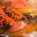 岩屋堂公園の紅葉2016!見頃やアクセス・駐車場は?