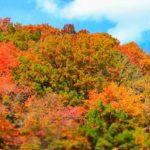 御在所岳の紅葉をロープーウェイから見よう!見頃の時期や見所は?