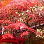 両界山横蔵寺の紅葉!見頃や駐車場、アクセスや見所情報など