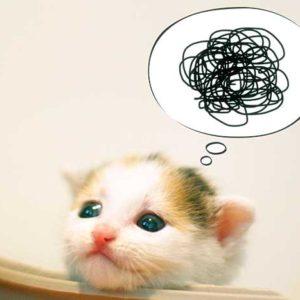 困ってる猫