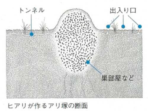 匕アリの巣