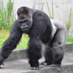 東山動物園のチケット料金はいくら?割引や無料開放日情報も!