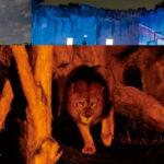 東山動物園ナイトZOO(ナイトズー)で夜の動物を楽しもう!料金や駐車場、見どころをご紹介!