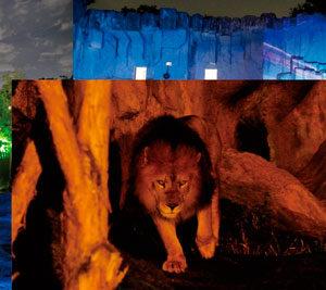 東山動物園 ナイトZOO