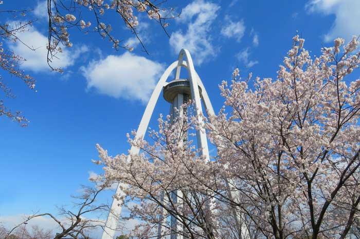 一宮・木曽川堤の桜を見に行こう!駐車場はココ!【138タワーも】