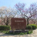 豊田・平芝公園の梅まつりに行こう!アクセス・駐車場・見どころまで!