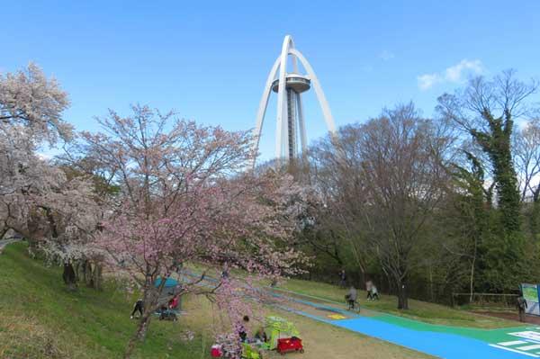 木曽川堤の桜と楽しむ人達