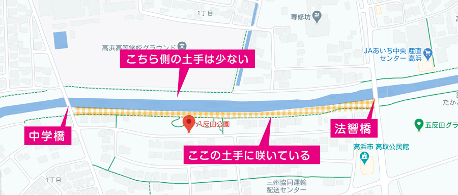 高浜市稗田川の彼岸花