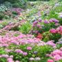 形原温泉あじさいの里・あじさい祭り2018!開花状況や駐車場情報、見所も!